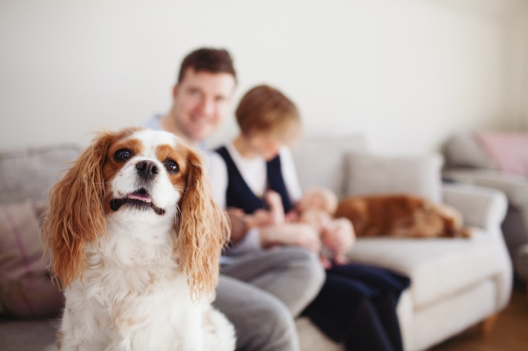 family dog spaniel and his people behind him